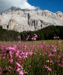 "AKU supports ""Labfest of the Unesco Dolomites"" and the mowing of meadows"