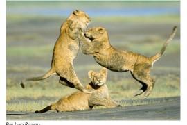 Ferrino: La natura e gli animali come non li avete mai visti! Oasis Photo Contest 2010