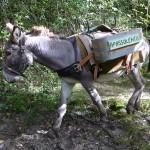 Durante il Trek con gli asini a Cesio Maggiore, Parco Nazionale Dolomiti Bellunesi